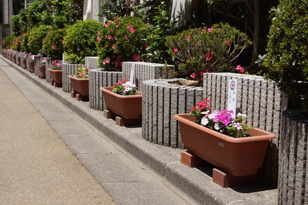 プランターへの花植え(学校中央道路)